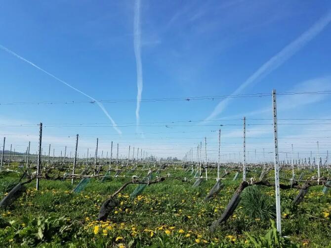 日本古老的葡萄酒产区介绍