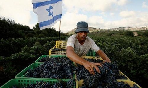 以色列葡萄酒,得天独厚的优势