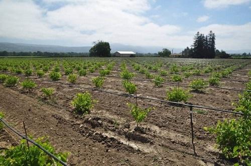 酿酒葡萄种植的物理环境