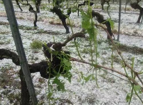 波尔多又遭遇冰雹,会不会涨价?