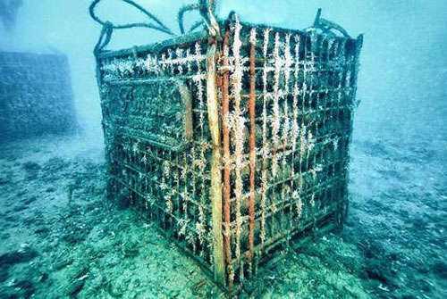 在海底深处陈酿葡萄酒有点过火吗?