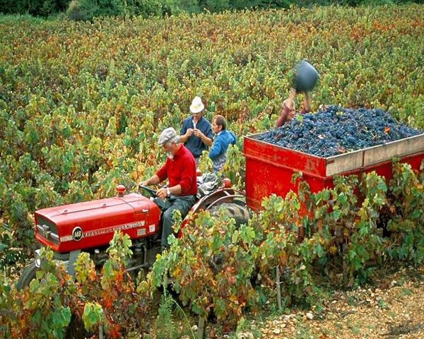 浅谈葡萄酒的年份