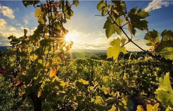 不同年份的葡萄酒为什么价格相差大?