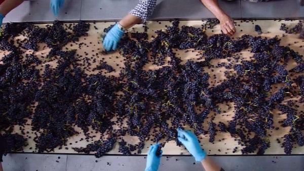 进口葡萄酒和国产葡萄酒的区别